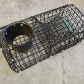 Lobster Pot Welsh D for sale